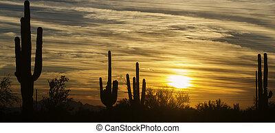 風景, 砂漠, アリゾナ, フェニックス