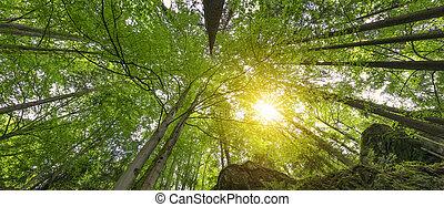 風景, montain, 森林, アルプス
