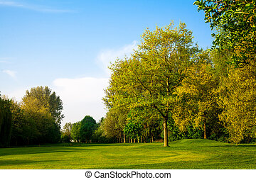 风景。, 夏天, 树, 绿色的领域, 美丽