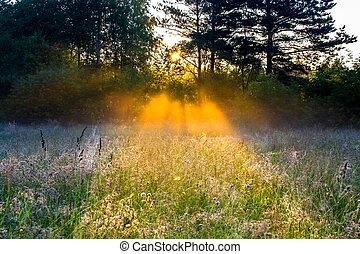 风景, 太阳, 乡村, 电波, 草地
