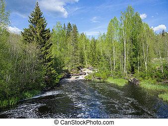 风景, 带, a, 河, 在中, the, 森林