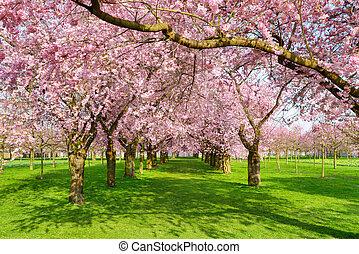 风景, 开花, 公园, 树