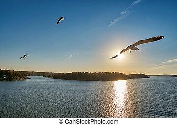 飛行, カモメ, 海, sunrays
