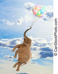 飛行, 風船, 象