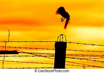 飞行, 脱开, 鸟, 栅栏, 监狱