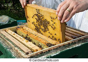 養蜂人, 關懷, 蜜蜂, 殖民地