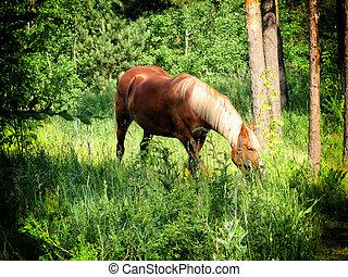 馬の色, 品種, flaxen, 森, 牧草