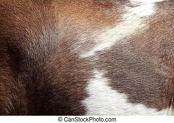 馬ヘヤ, 皮膚, 手ざわり, 茶色と白