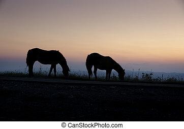 馬, ∥において∥, 日没