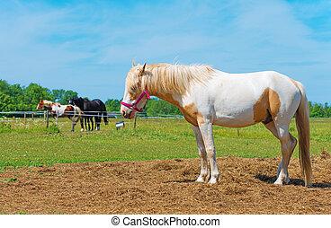 馬, スペース, text., あなたの, 赤, bridle.