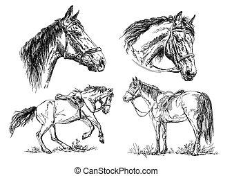 馬, セット, 手, ベクトル, 黒, 白, 図画