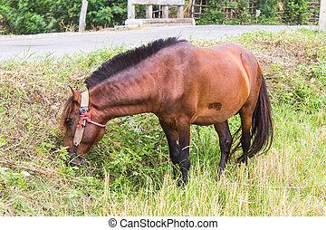 馬, フィールド