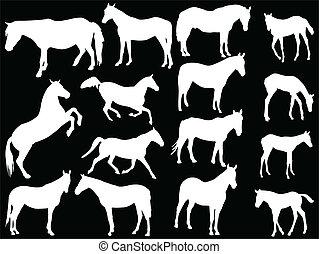 馬, ベクトル, -, コレクション