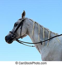 馬, 上に, 青い空
