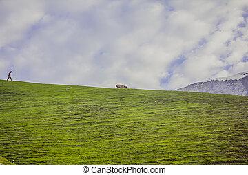 馬, 丘, 牧草