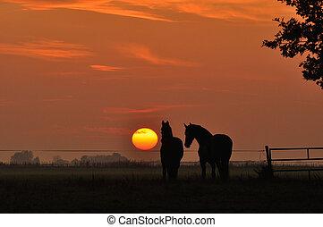 馬, 中に, 日没