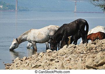 馬, 中に, 池