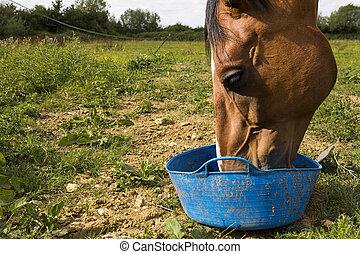 馬, 供給