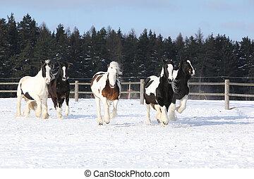 馬, 動くこと, グループ, 冬