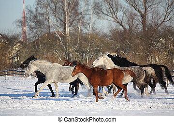 馬, 動くこと, 冬, 群れ