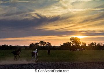 馬, 動くこと, 日没