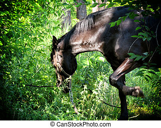 馬, 品種, 湾, 暗い, 森, 牧草
