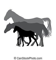 馬, 家族, 隔離された, シルエット, 背景, 白