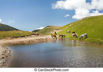 馬, 山, 池