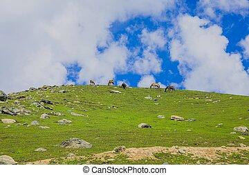 馬, 山, 牧草