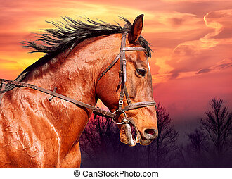馬, 操業, に対して, 湾, 日没, 肖像画
