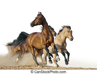 馬, 操業, 中に, a, 野生