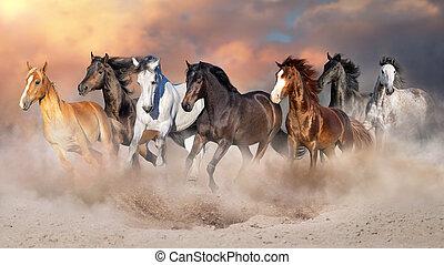 馬, 操業, 砂漠