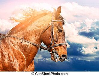 馬, 操業, 空, 曇り, 湾, 背景, 肖像画