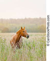 馬, 日の出