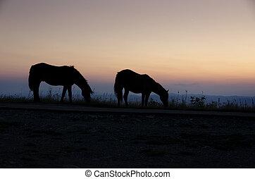 馬, 日没
