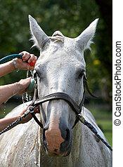 馬, 洗浄
