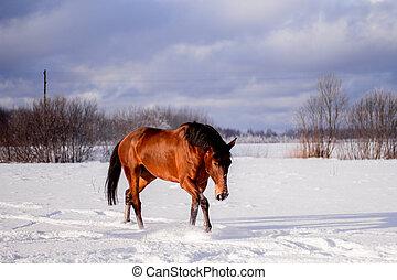 馬, 湾, 小走りに走ること, 雪