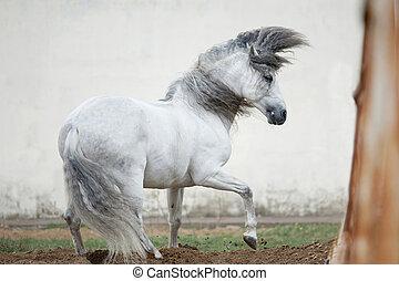 馬, 無料で, andalusian, に対して, 背景, 白