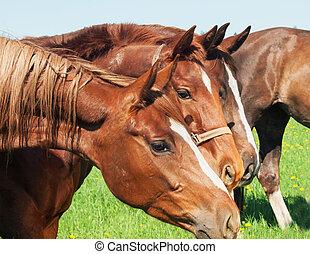馬, 牧草地, グループ肖像画