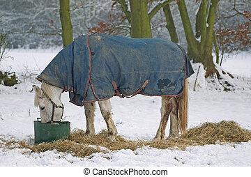 馬, 白, 食べること, 雪