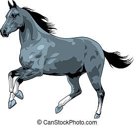 馬, 白, 黒, 隔離された, 背景