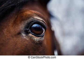 馬, 目, 細部
