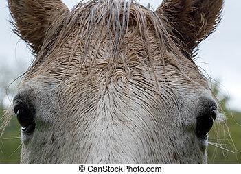 馬, 目, 終わり