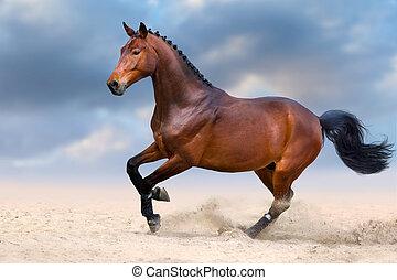 馬, 砂漠