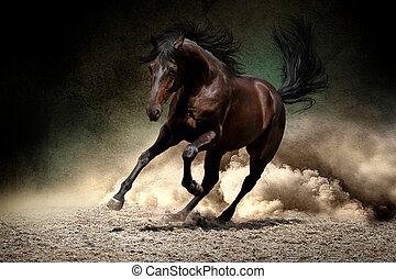 馬, 砂漠, gallop