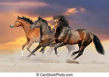 馬, 砂, 操業, 砂漠