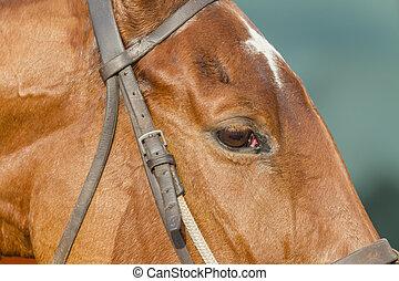 馬, 種馬
