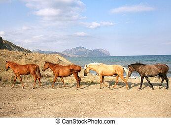 馬, 群れ