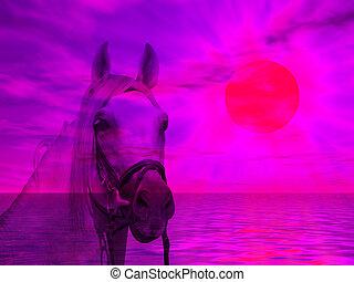 馬, 肖像画, 中に, ∥, 日没