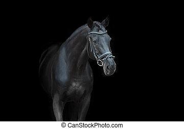馬, 肖像画, 添え金